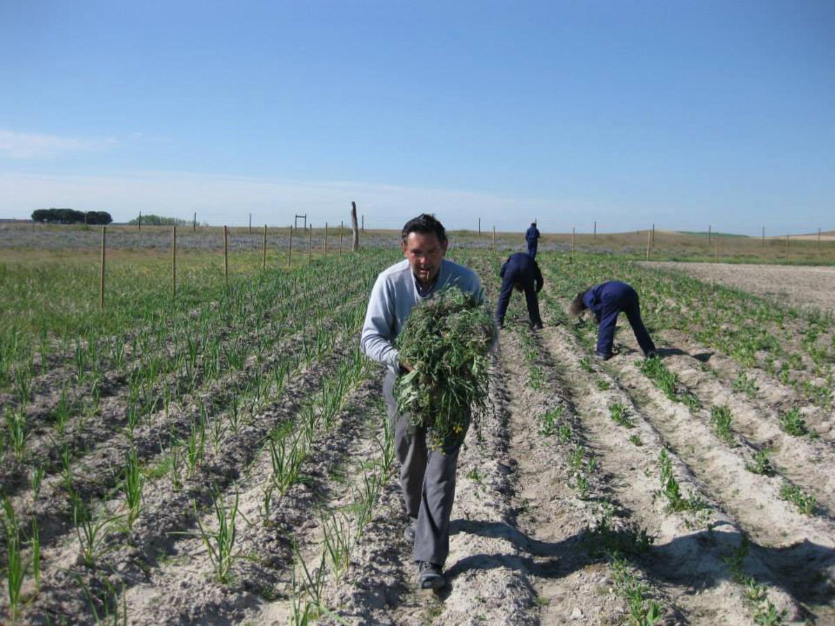 Huerto Cantagrullas: sembrando oportunidades