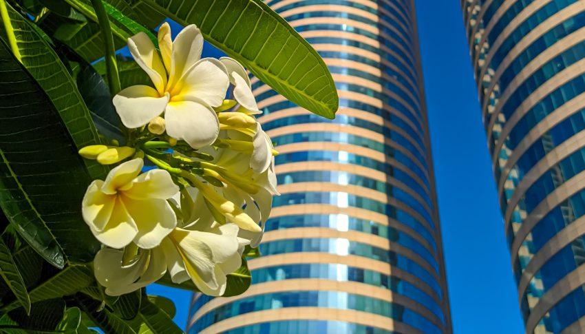 Hipotecas verdes: una gran herramienta de la banca para la descarbonización