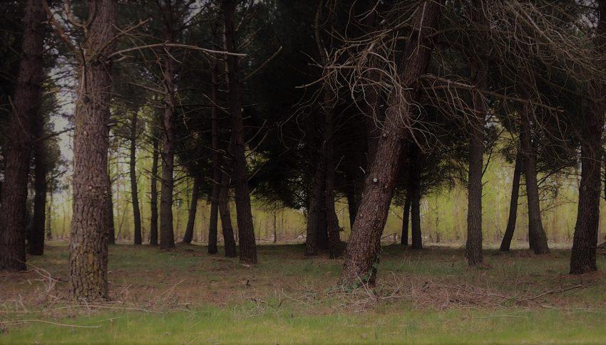 Los edificios de madera, una oportunidad para el sector forestal en Castilla y León